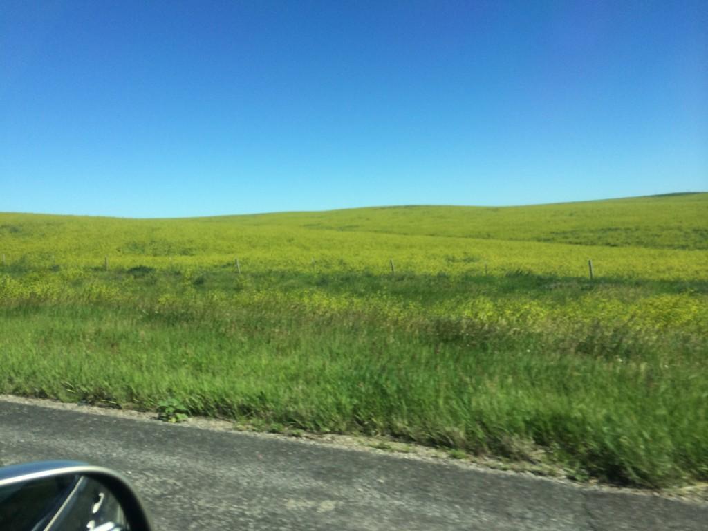 "Fields of ""moo-stard"""